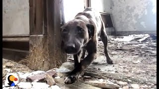 Download Dog Abandoned In Crumbling Building RESCUED, Adopted by PERFECT People | The Dodo Video