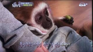 Download 원숭이생활 방영 GMtv 동물농장 영상감독 이상웅-2016.07.17. 00038 Video