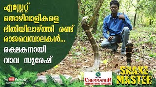 Download WOW! Vava Suresh turns saviour of two King Cobras that terrorized estate owners | Snakemaster Video