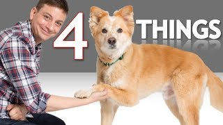 Download If Your Dog can Shake You Won't Believe What Else He can Do! Video