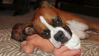 Download Boxer and Baby Compilation Video