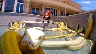 Download I Filled my Swimming Pool with GIANT SNAKES!! **scary** Video