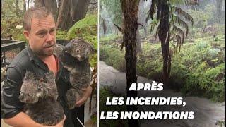 Download Après les incendies, des pluies torrentielles frappent l'Australie, dévastant ce parc animalier Video