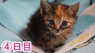 Download 走り寄ってくる子猫ちゃん 4日目 Video