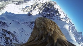 Download Flying eagle point of view #3 Video