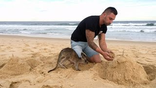 Download When Your Pet Kangaroo Is Your Best Friend Video