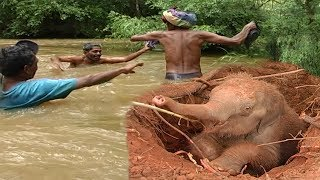 Download One of the greatest baby elephant rescue operations: Deep in the wild Video