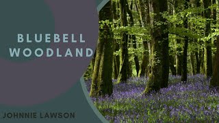Download 8 Hour Nature Sound Relaxation-Soothing Forest Birds Singing-Relaxing Sleep Sounds-Without Music Video