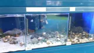 Download Mega sklep zoologiczny Video