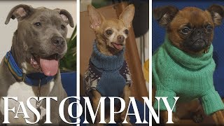 Download Why Pets Make The Best Instagram Influencers | Fast Company Video