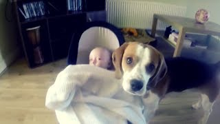 Download This Dog Was Left Alone With The Baby – But The Family Were Filming His Behavior Video