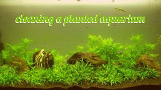 Download how to clean a fish tank (my dirty planted aquarium) 1080p Video