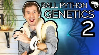 Download Ball Python Genetics 2: Dominant, Recessive, Codominant, Incomplete Dominant Video