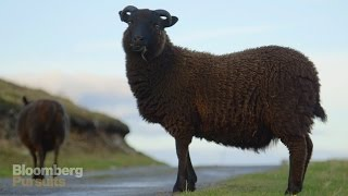 Download How the World's Softest Wool is Made Video