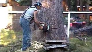 Download Huge 118 Ft Tree Cutting Lake Almanor Style 7/8/11 Video