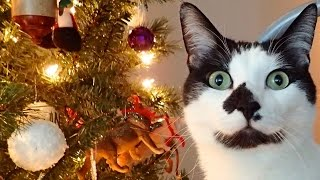 Download 8 Signs Your Cat Believes in Santa Video