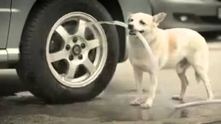 Download Dog heart touching video Video