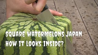 Download Square watermelons Japan. English version Video