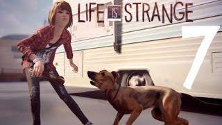 Download Life Is Strange Walkthrough Gameplay Part 7 - Dog Attack (PS4) Video