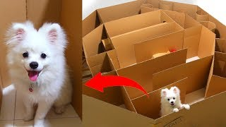 Download Hexagon Maze And Ball For Snowball Dog Hugo Hamster And Corn Kitten Playing Video