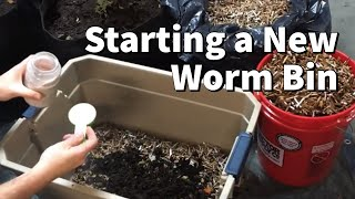 Download How I Start A New Worm Bin Video