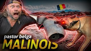 Download MALINOIS, MEDO DESSA FERA! | RICHARD RASMUSSEN Video