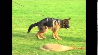 Download Paer v. Hasenborn at the age of 4 months Video
