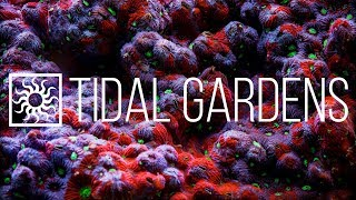 Download Tidal Gardens March 2019 Show #2 - Mix of ALL Corals Video
