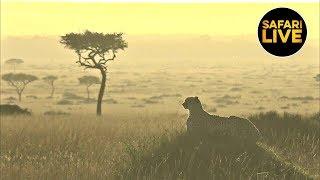 Download safariLIVE - Sunrise Safari - April 16, 2019 Video