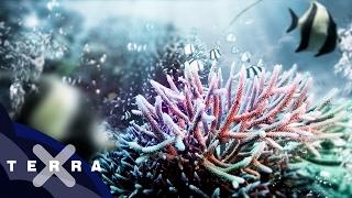 Download Wie Korallen das Wetter beeinflussen | Klimawandel Video