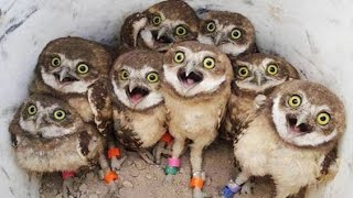 Download Funny Owls And Cute Owl Videos Compilation 2016 Video
