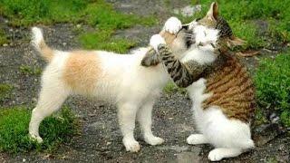 Download Meilleures Chiens et chats drôles de Janvier 2015 [FULL HD VIDEO] Video