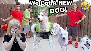 Download MY DOGS RAN AWAY!! (I CRIED) (PRANK) Video