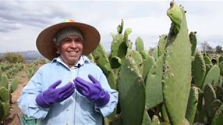 Download Doña Anastasia vende sus galletas de nopal y amaranto en el Mercado de Productores Video