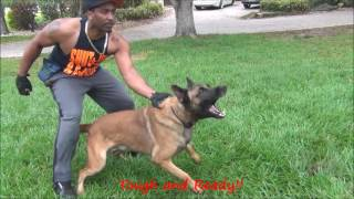 Download Jack A Family Protection Dog The K9 Training Academy Video