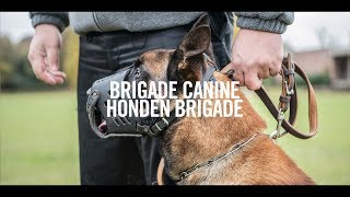 Download Brigade canine STIB / Hondenbrigade MIVB Video