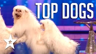 Download 10 Amazing Acrobatic & Dancing Dog Auditions On Got Talent | Got Talent Global Video