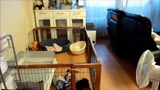 Download 脱走しても飼い主の帰りに合わせてサークルに戻るダックス(^ ^;)・This is amazing ! Dog back and escaped from the kennel Video