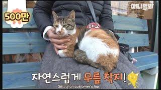 Download 피자집 의자에 앉기만 하면~ 고양이가 무릎위로 온다? 고양이를 부르는 요술 의자 Video