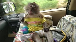 Download Monkey Wired In Her Car Seat Video