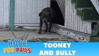 Download Hope For Paws: This pregnant Pit Bull was not alone under this abandoned school!! Video