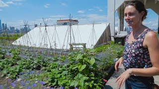Download Urban Farming: Growing Food in NYC Video