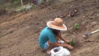 Download Replanting Some Plants In Our Newly Made Garden Site Video