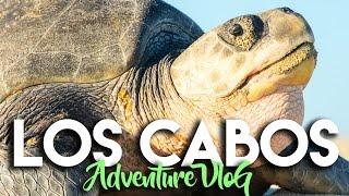 Download EXPLORING NATURE IN LOS CABOS MEXICO WITH CAJAFRESCA Video