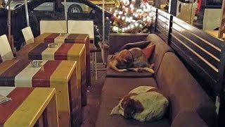 Download Woman Opens Cafe at Night to Shelter Stray Dogs Video