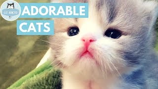 Download Cute Kittens That Will Make You Fall In Love Video