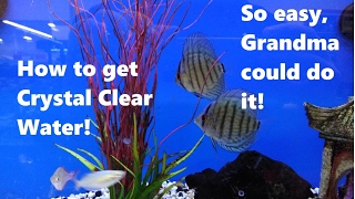 Download 5 EASY tips to get crystal clear water! Video