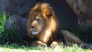Download Animal Adventure at the Denver Zoo, Colorado, USA Video