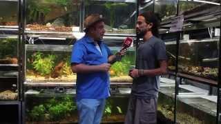 Download Peces como mascotas: visitamos el acuario de Ciudad Aventura Video