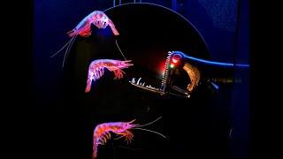 Download Creatures of Light exhibit opens at Frost Museum Video